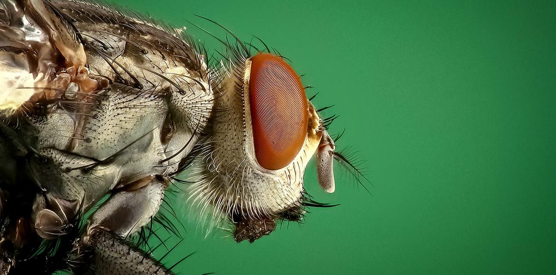 Ojo de insecto